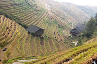 Ping An Rice Terraces