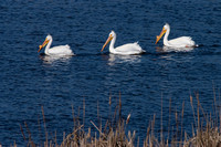 Get Your Pelicans in a Row