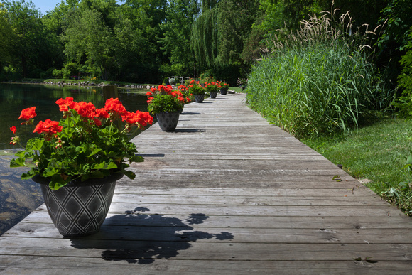 Geranium Boardwalk